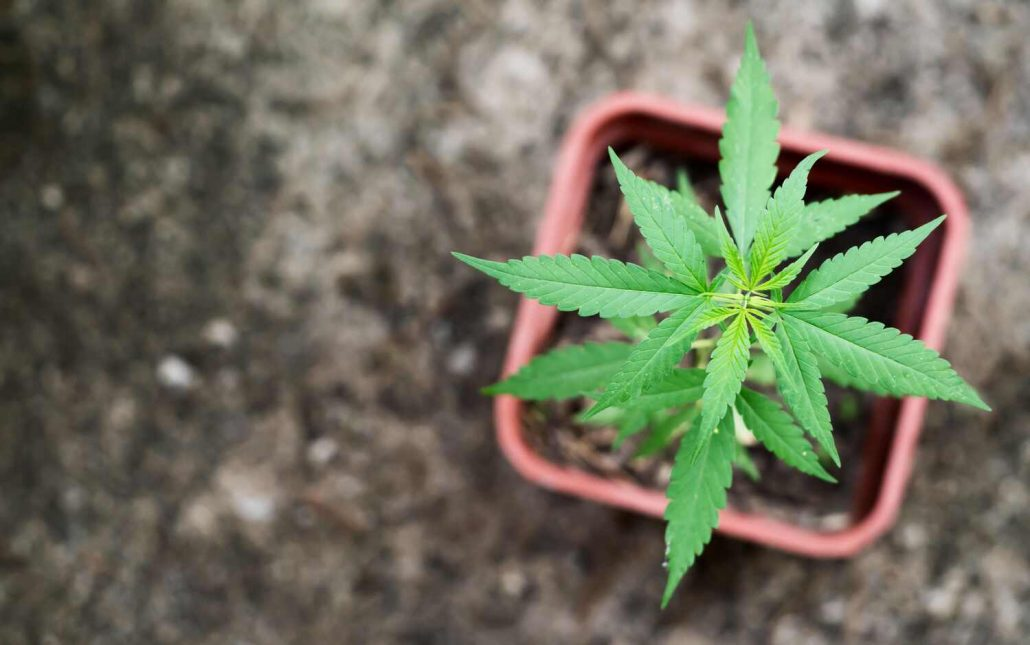 PA Medical Marijuana Updates