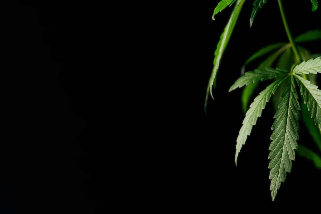 What You Need to Know About Mississippi's Medical Marijuana Program